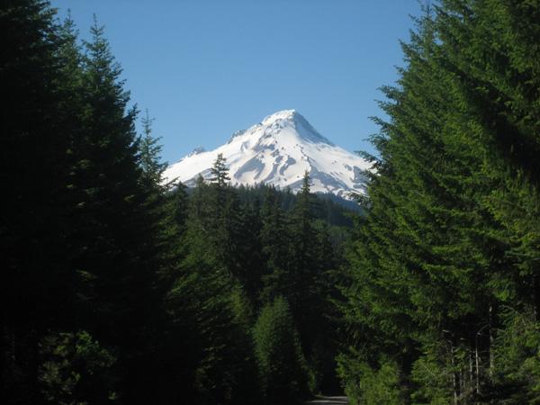Mount Hood from NFSR 43