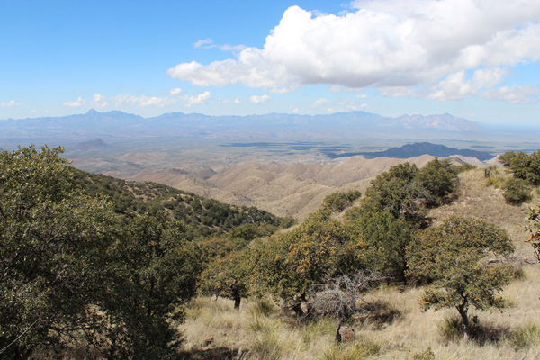 Baboquivari Mountains, Kitt Peak, and Coyote Mountains from Keystone Peak.