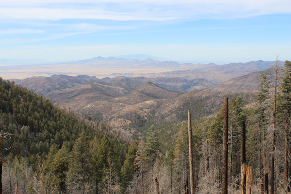 Mount Graham from Chiricahua Peak