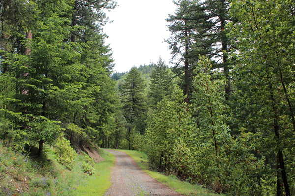 Mount Isabelle Summit Road