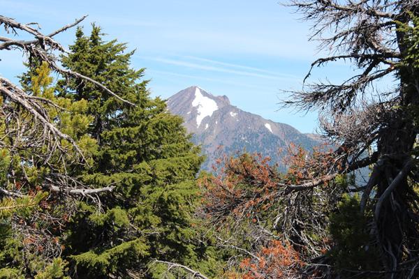 Mount McLoughlin from Brown Mountain