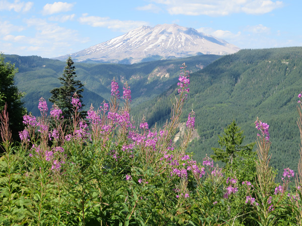 Mount Saint Helens from near Clearwater Viewpoint