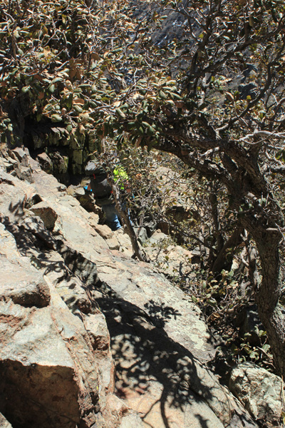 Eric descends through thick brush below the South Peak