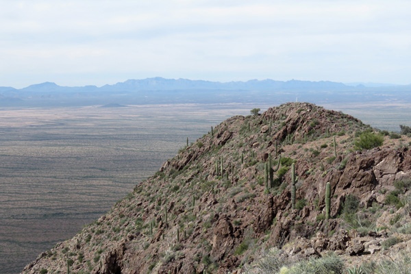 The Ajo Range to the west from the South Mountain Benchmark