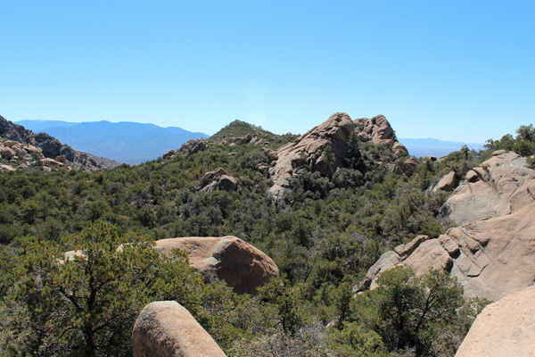 Looking back across the manzanita/pine forest