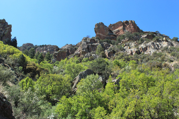 The Silver Peak Trail traverses across densely forested gullies on it's way up the peak