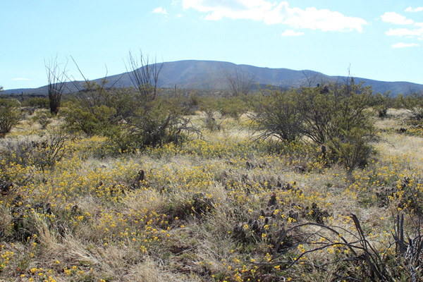 Wildflower and hedgehog cactus patches decorate the desert floor