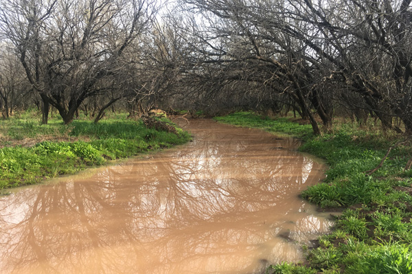 The San Simon Wash flowing from recent rains (Matthias Stender photo).