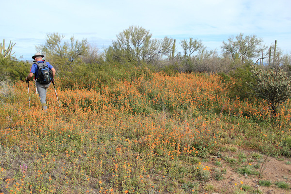 Michael and Scott lead through a patch of globe mallow