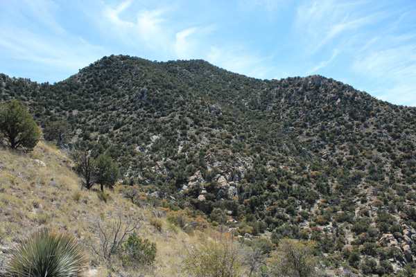 The north slopes of Forest Hill, Little Rincon Mountains