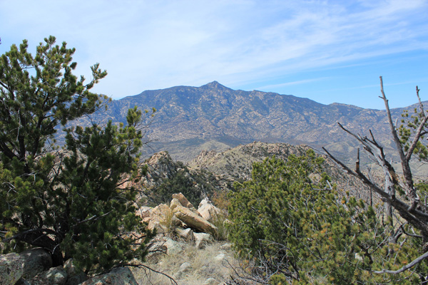 Rincon Peak to the west from the Forest Hill summit