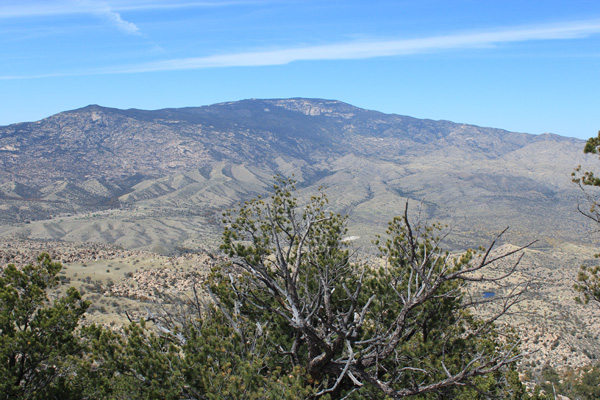 Mica Mountain, the highpoint of the Rincon Mountains, from the Forest Hill summit