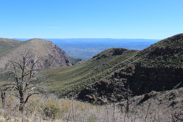 View back towards the top of the Barnhardt Canyon and the brushy north slopes