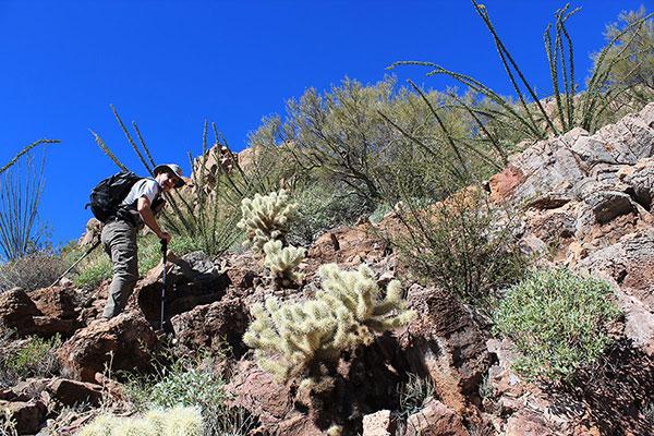Scott P. climbing over a short ledge around teddy bear cholla