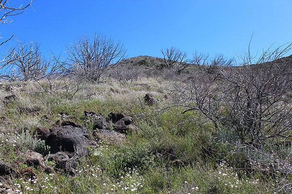 Looking up the west ridge through Catclaw Acacia (Senegalia greggii)