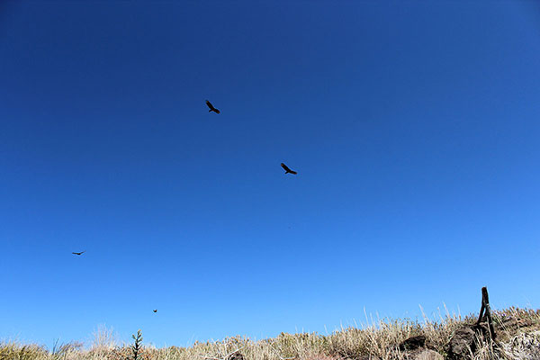 Four vultures circle above me as I leave the summit