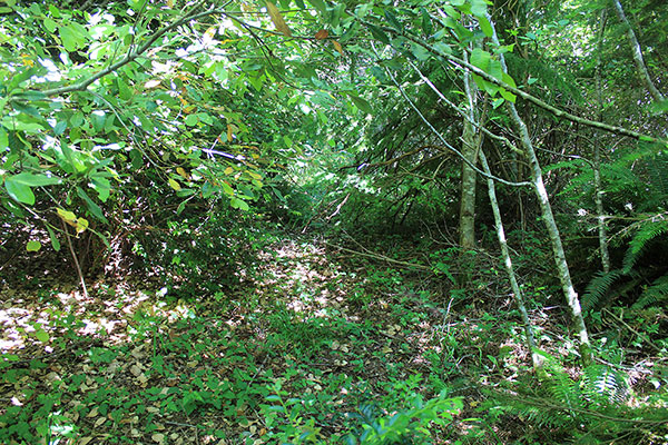 Brush and low trees slow our progress, but the flat surface is much easier to follow than the forest on either side