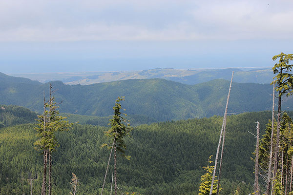 The Pacific Ocean and beaches to the west from Edson Butte summit.