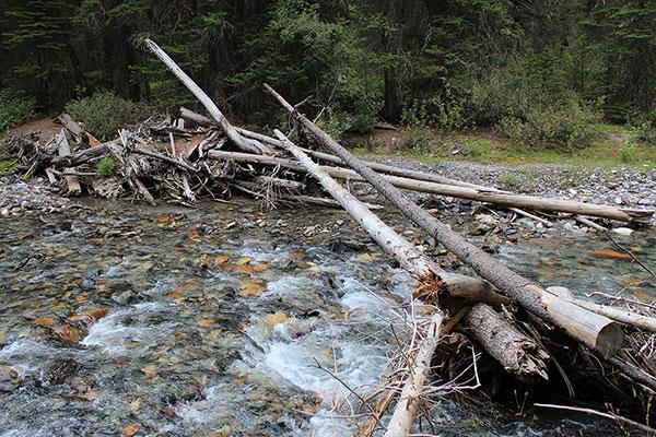The improvised log bridge over Hurricane Creek