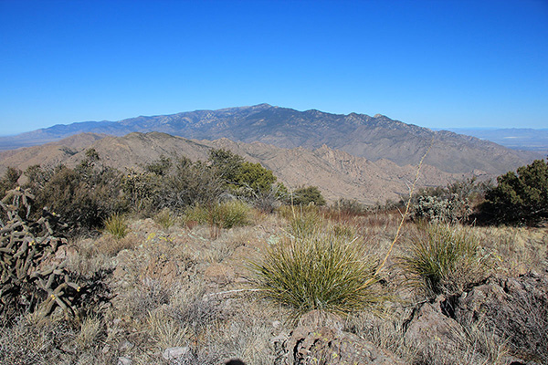 The Pinaleno Mountains rise to the north from the Greasewood Mountain summit