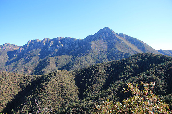 Mount Wrightson from the Agua Caliente Trail