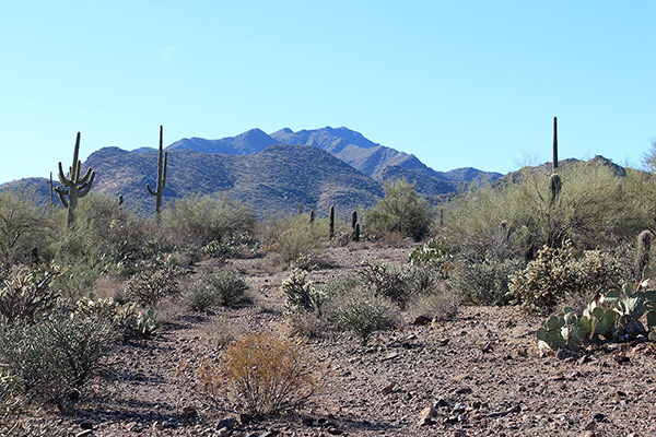 Our view of Prieta Peak from the road near the Desert Queen Mine