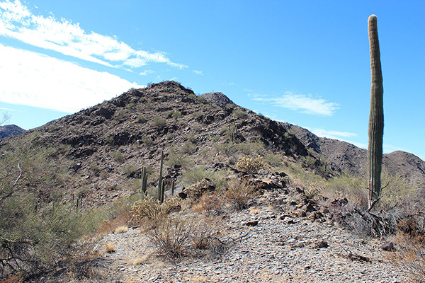 I thought the subpeak with the solitary saguaro above us might be close to the summit