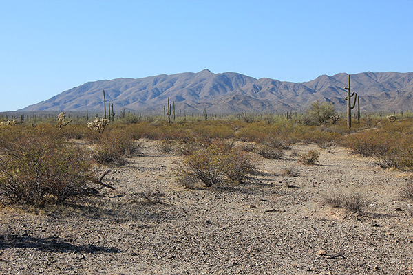 Javelina Mountain and Maricopa Peak early in the drive in Tuesday morning
