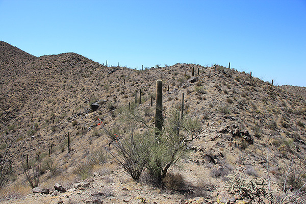 I follow the ridge crest, occasionally stepping around a cactus or spiny bush