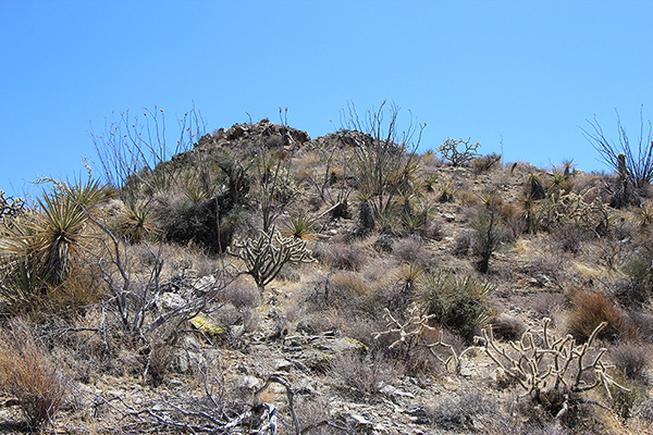 Desert plants decorate the steepening slope
