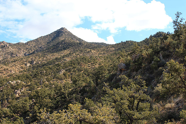 From my parking spot I gained and followed the ridgeline leading towards Peacock Peak on the left