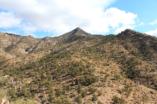 I followed the mostly open ridgeline as it wound upwards towards the summit