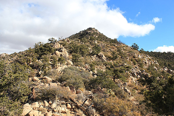 The route passes around rock blocks, under trees, and through brush as I approach the summit