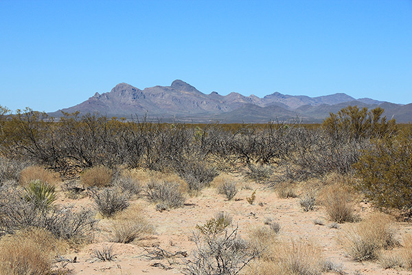 The Whitlock Mountains and Javelina Peak from the southeast on the drive in to Whitlock Peak